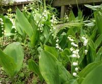 1505 flower.jpg