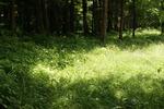 1206 green.jpg